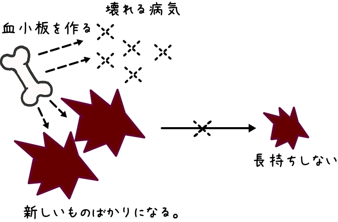 血液検査のMPV(Mean platelet volume)とは